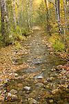 Caribou Creek, in autumn, flows into Deep crrek and then the Kootenai River, Boundary County,  Idaho.