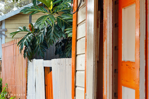The breadfruit tree - Studies of colourful local wooden houses