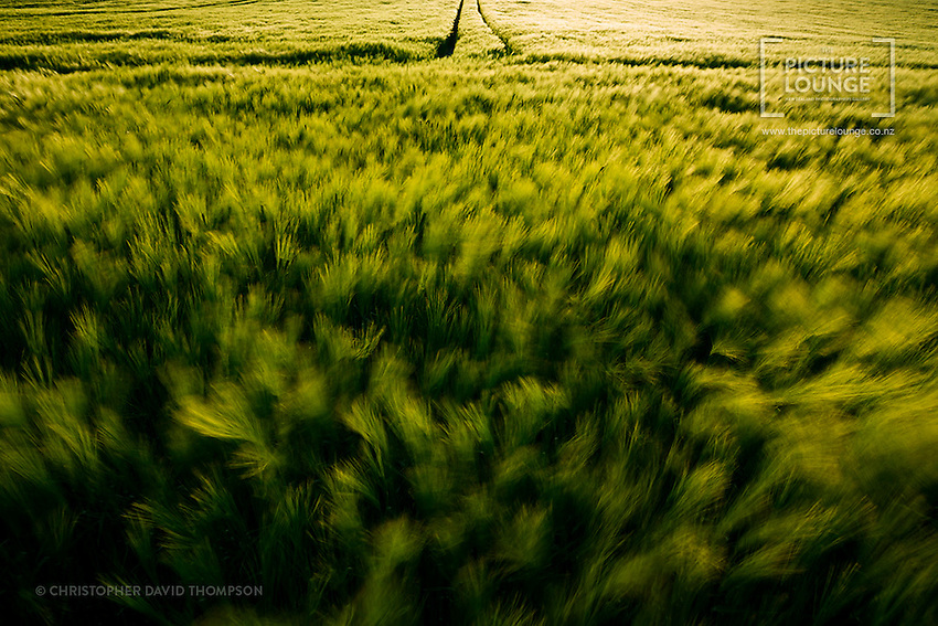 New Zealand based international landscape and travel photographer Christopher Thompson spent an evening in the lush fields of Neubrandenburg, Germany, capturing the beauty of a very verdant Germany in the late spring / early summer. He was fascinated by the movement of the wind through the fields, so this beautifully artistic image captures that in an almost abstract way.
