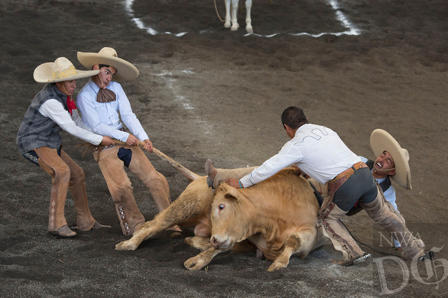 "In this Feb. 28, 2015 photo, teammates struggle to lift a bull off the trapped leg of a charro, during the bull riding event at a charreada in Mexico City. National Charros Association President Manuel Basurto Rojas said: ""We in charreria are taking things into our own hands. We have codes, we have rules, for how to treat the animals. On the other hand, there is a lot of danger involved for the men doing these tricks."" (AP Photo/Rebecca Blackwell)"