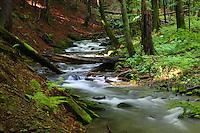 Tworylczyk Stream in Bieszczady National Park, Poland