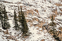 Mountain Goat (Oreamnos americanus) on snow covered mountainside in Northern Rockies, late fall/early winter.