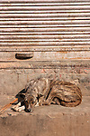 Dog-Bazaar in Taj Ganj, Agra