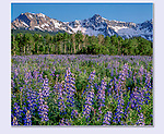 The Sneffels Range is one of Colorado's most beautiful, right from the highway. Ridgeway, Colorado.