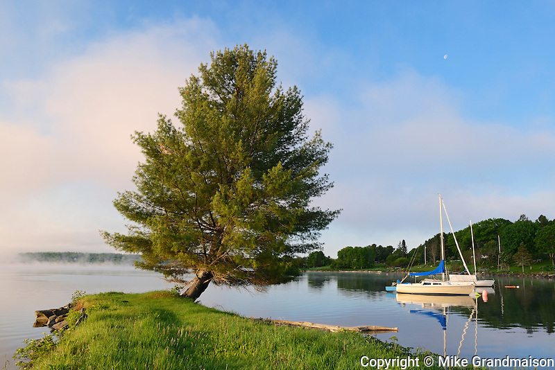 Boat and white pine in fog<br /> Mactaquac<br /> New Brunswick<br /> Canada