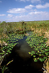 FL: Florida Everglades National Park, sawgrass, Anhinga Trail.Photo Copyright: Lee Foster, lee@fostertravel.com, www.fostertravel.com, (510) 549-2202.Image: flever206