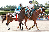 Another Romance on post parade for The Azalea Stakes (G3), Calder Race Course, Miami Gardens Florida. 07-07-2012.  Arron Haggart/Eclipse Sportswire.