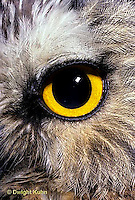 OW11-001z   Saw-whet owl - close-up of eye - Aegolius acadicus