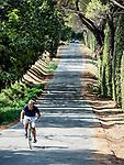 A man rides his bicycle along a cypress-lined road, Di Ricerca, Tuscano, Italy