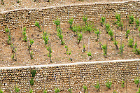 vineyard crozes hermitage rhone france
