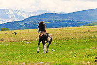 Blackfeet horses. Colt