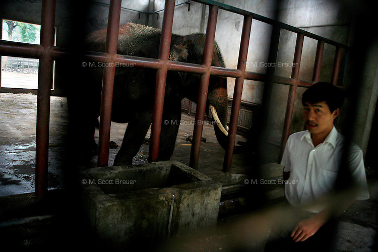 A zookeeper walks past an elephant in a small concrete and metal cage at the zoo in Nanjing, China.