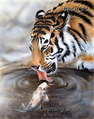 Sandi, REALISTIC ANIMALS, REALISTISCHE TIERE, ANIMALES REALISTICOS, paintings+++++onemorekiss,USSN61,#a#, EVERYDAY ,tiger,tigers, ,puzzles