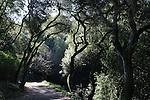 Trail in greenbelt in Hayward