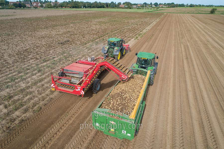 Harvest potatoes - Lincolnshire, September