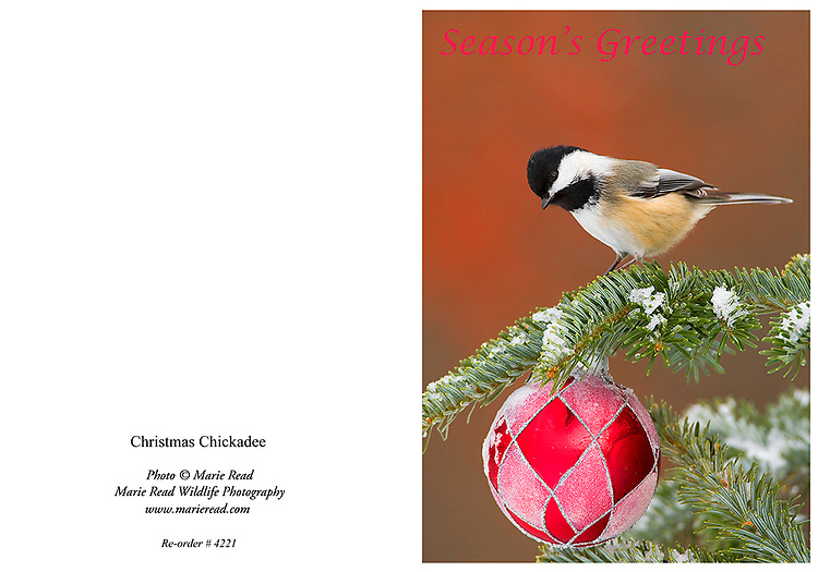 XmasChickadeeCard<br />