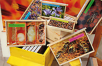Honey Bees Educational Materials