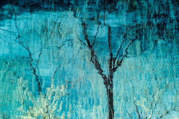 Abstract photograph of tree reflected in water