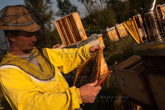 Venezia - Valle Millecampi. Riccardo Stefani porta le sue api in queste barene della Laguna Sud, tra Pellestrina e Chioggia. Qui produce uno dei migliori mieli di barena.