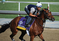 Awesome Feather, trained by Chad Brown, exercises in preparation for the upcoming Breeders Cup at Santa Anita Park on November 1, 2012.