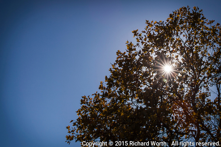 A clear blue sky.  Leaves with an autumn-yellow tinge.  Punctuated by a sunburst exclamation mark.