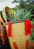 A-Ukre village, Xingu, Brazil. Kayapo Indian basket with red tassles containing pineapples. Xingu Indian Reserve.