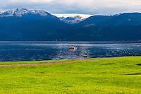 Norway, Øystese. Folgefonna glacier above Hardangerfjord.