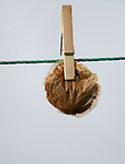 Round tea bag held by wooden peg on clothes line concept of thrift and austerity