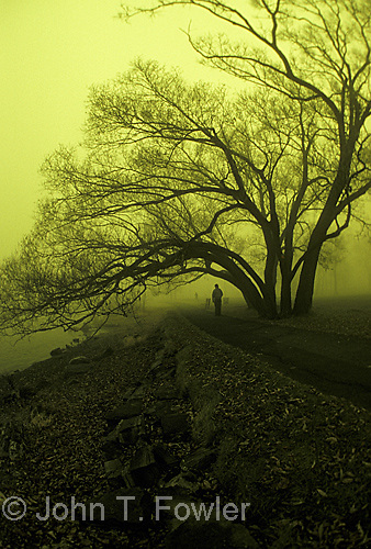 Alone in early morning mist