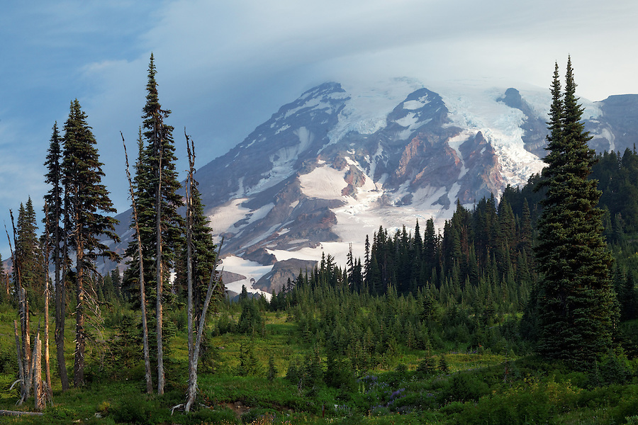 Mount Rainier over subalpine meadow on Mazama Ridge, Mount Rainier National Park, Washington, USA