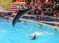 Zuschauer genießen die Delfinshow im Stadion Sam im Vergnügungspark Zoomarine - 25.09.2019: Zoomarine Park, Guia, Albufeira an der Algarve