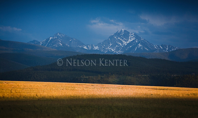 Sunlight on a field in front of the high peaks of the Anaconda Pintler Mountains