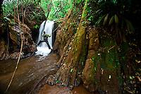 Nova Lima_MG, Brasil...Estacao Ecologica de Fechos em Nova Lima, Minas Gerais...Fechos Ecological Station in Nova Lima, Minas Gerais...Foto: JOAO MARCOS ROSA  /NITRO.