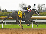 LEXINGTON, KY - APRIL 6: #4, Shanghaied Roo, ridden by Gabriel Saez breaks his maiden at Keeneland Race Course on April 6, 2018 in Lexington, KY. (Photo by Jessica Morgan/Eclipse Sportswire/Getty Images)