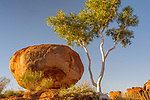 Ghost gum (Corymbia aparrerinja), Karlu Karlu / Devils Marbles Conservation Reserve, Northern Territory, Australia<br /> This gum is only slightly bigger than when I last photographed it in 1990. That is a testament to the harsh climate these trees live in.<br /> <br /> Canon EOS-1D Mark IV, EF24mm f/1.4L II USM lens, f/14 for 1/8 second, ISO 100