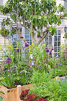 Beautiful raised bed den, Vegetables, carrots, peas, cabbages, flowers, irises, house, in lush variety growing together intermixed, fig tree, ornamental onions, blue flowers, purple flowers, red lettuce, edible landscaping, herb chives intermixed potted, raised beds