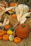 Fall Harvest display at Pumpkin patch, Goyettes Ranch Apple Farm, Camino Eldorado County, California