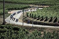 peloton rolling through the vineyards. <br /> <br /> Stage 5: Saint-Dié-des-Vosges to Colmar (175km)<br /> 106th Tour de France 2019 (2.UWT)<br /> <br /> ©kramon