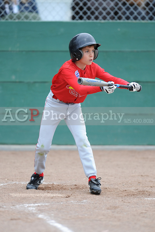 The AAA Cardinals play on opening day in Pleasanton National Little League  March 14, 2009.