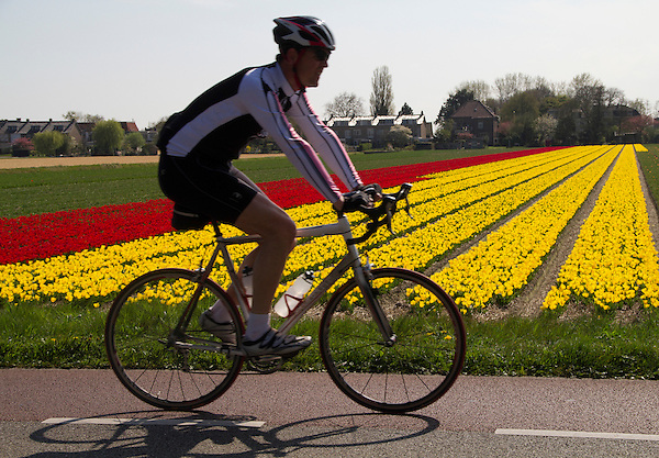 Cyclist north of Keukenhof Gardens, Lisse, Netherlands.