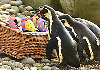 APR 18 Easter Photocall at ZSL London Zoo