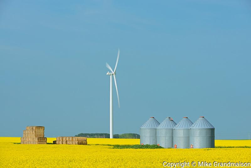 Canola and wind turbines, Saint Leon, Manitoba, Canada