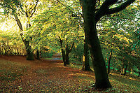 A woodland path during autumn, Queen's Park, Glasgow