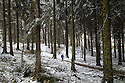 09/11/16<br /> <br /> A walker explores snow covered forest above Ladybower Reservoir in the Derbyshire Peak District, <br /> <br /> All Rights Reserved F Stop Press Ltd. (0)1773 550665   www.fstoppress.com