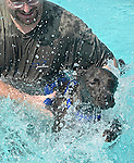 "Phil Lavin of Laurel is glad ""Olie"" is taking to the pool with a big splash.  It's Olie's very first time in the water."