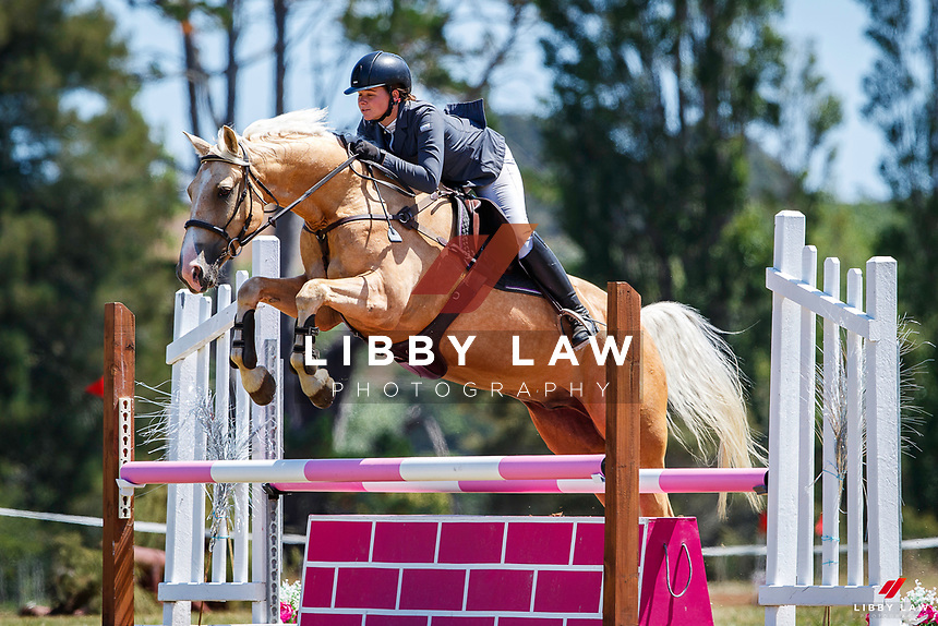 Class 33 Intro Horse 90cm. 2020 NZL-Fieldline Horse Floats Brookby Showjumping Summer GP Show. Papatoetoe Pony Club. Auckland. Sunday 9 February. Copyright Photo: Libby Law Photography