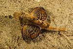 Fishes-Bony_Osteichthyemy_Atlantic