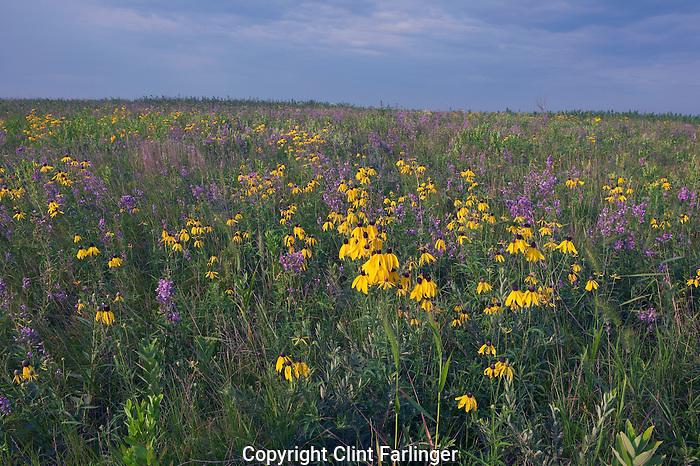 native tall-grass prairie in bloom, Hayden Prairie State Preserve, Howard County, Iowa