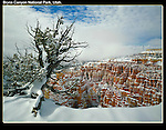 Snow is common in this high park.<br />
