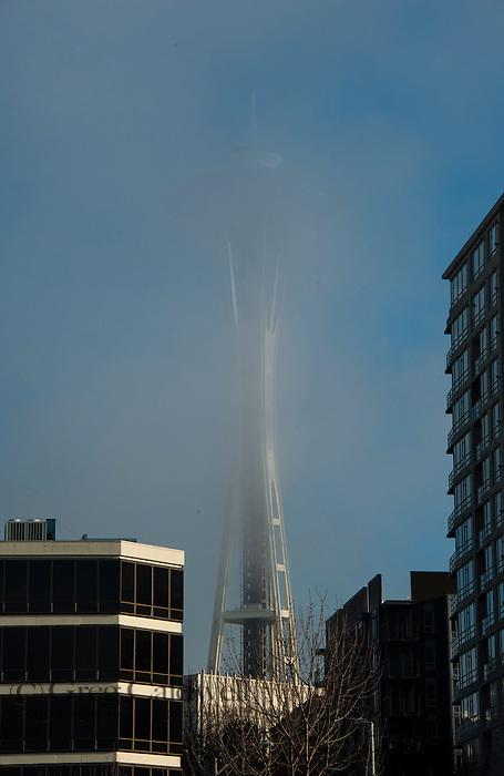 Light fog shot from Olympic Sculpture Garden